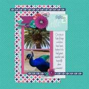 Cali Peacocks