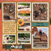 Animal Kingdom- Asia