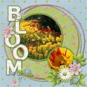 Ottawa Blooms
