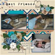 Boy's Best Friends