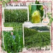 In the corn fields