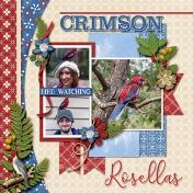 Crimson Rosellas