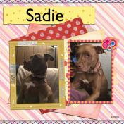 Sadie Again