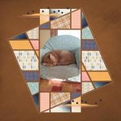 Sleeping spunky