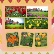 Tulips from NZ and Canada for the April Kits May Layout Challenge