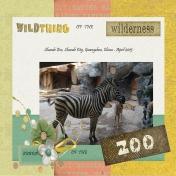 Zebra at the Zoo