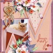 Kitty Cafe February 2020