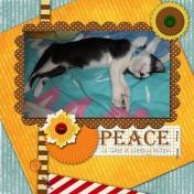 Peace is like a kitten sleepping