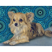 PET PORTRAITS FOR CHARITY - CHI