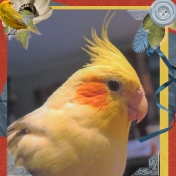 My Feathered Baby, Monty