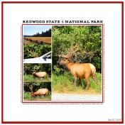Redwood State & National Park