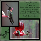 hummingbirds 2