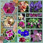 Flowers of Washington DC