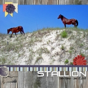 20130613_WildIslandStallion