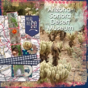 Arizona 11