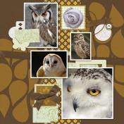 Owls #1