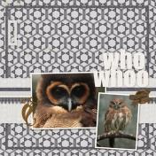 Owls #2