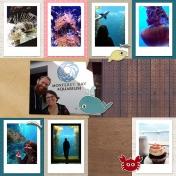 Week 36 September Aquarium 2017