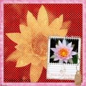 2009-07-22, Lilies