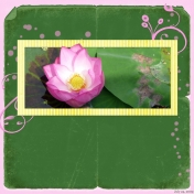 2009-07-24, Lilies