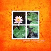 2009-07-26, Lilies 2