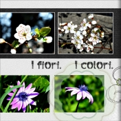 I fiori- I colori- la belezza