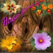 Helga's Flowers
