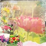 My Passion Gardening I