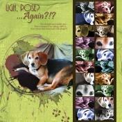 Beagle-ratzi