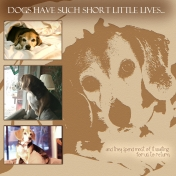 Short Lives of Dogs