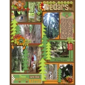 Day 9- Ross Creek Cedars