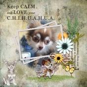 My chihuahua love