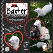 Baxter the Ferret