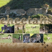 Mom and Son Cheetahs
