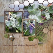 grapes and hexagons