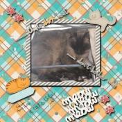 Simon cat napping