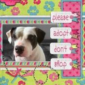 please adopt don't shop