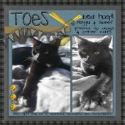 Toes- A Furbaby looking for his furever home......