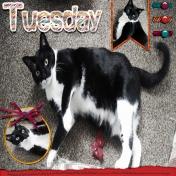 Tuxedo Tuesday