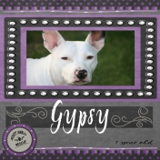 Misfit Gypsy