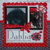 Misfit Dahlia!