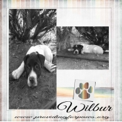Wilbur!!