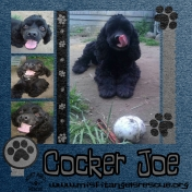 Misfit Cocker Joe!