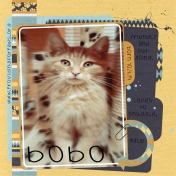 "Providing for Paws ""Bobo"""