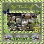 duck,duck,duck,duck,geese!!