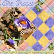 The Crocus
