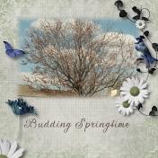 Budding Springtime