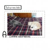 Tout sur mes chats-A