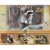 At the zoo (raccoon)