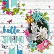Hello Spring (crocus)